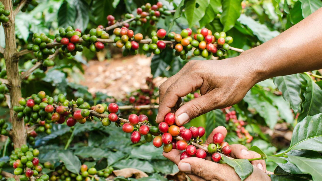 Boosting farmer incomes